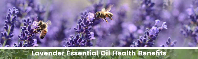 Lavender Essential Oil Health Benefits