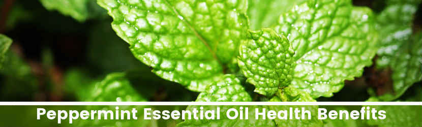 Peppermint Essential Oil Health Benefits