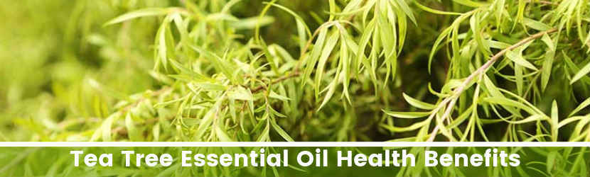 Tea Tree Essential Oil Health Benefits